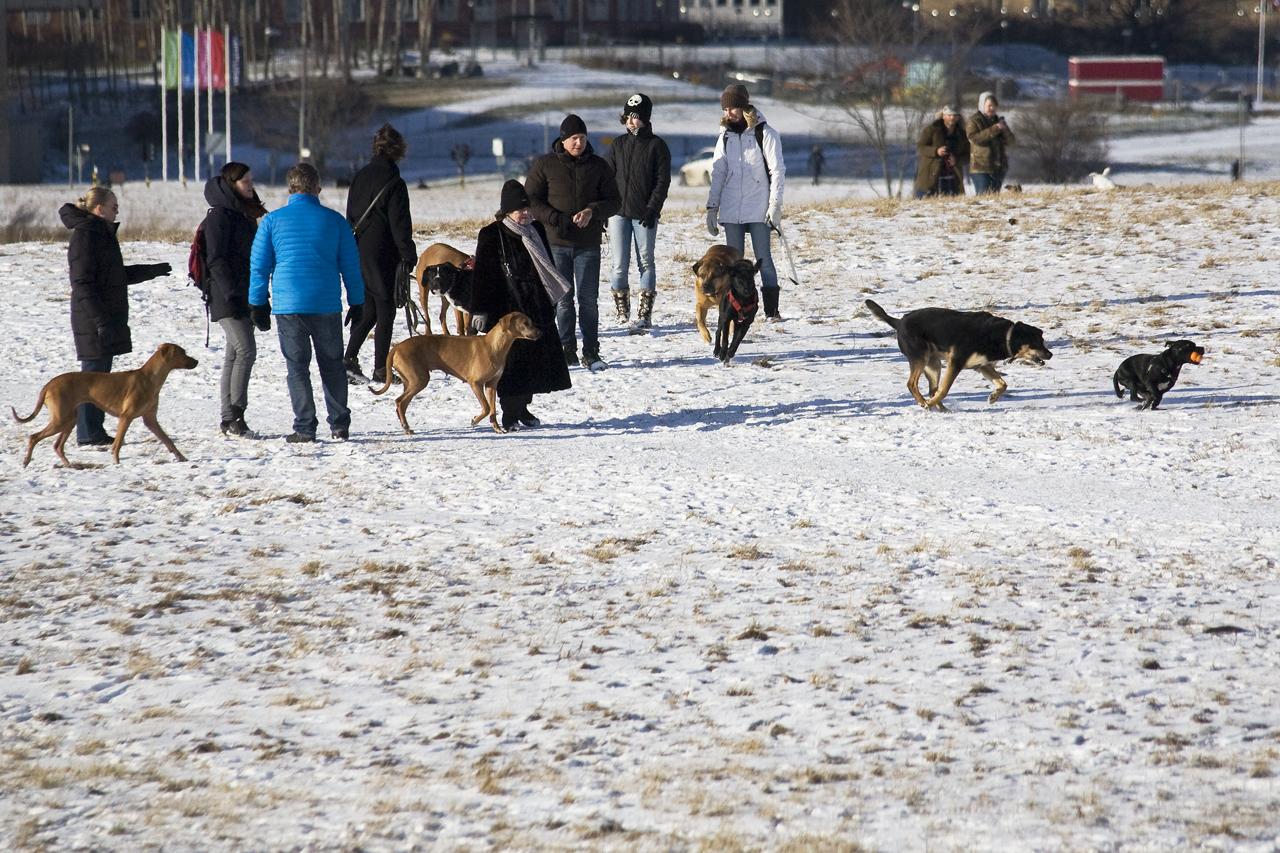 hundar på Gärdet i Stockholm