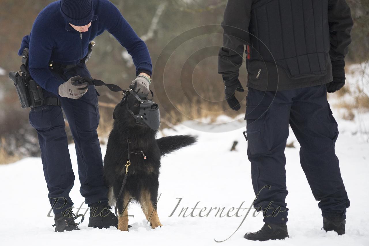 polishund munkorg på