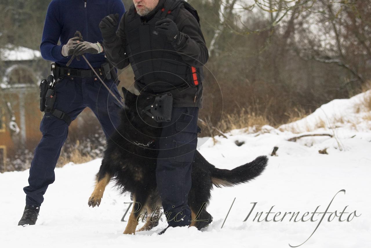 polishund skydd
